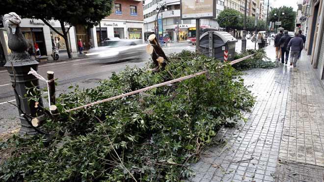 El temporal deja 114 árboles caídos en la ciudad de Valencia