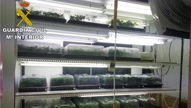 La Guardia Civil desarticula en la Marina Alta varias plantaciones indoor de marihuana y se incauta de más de 6.000 plantas