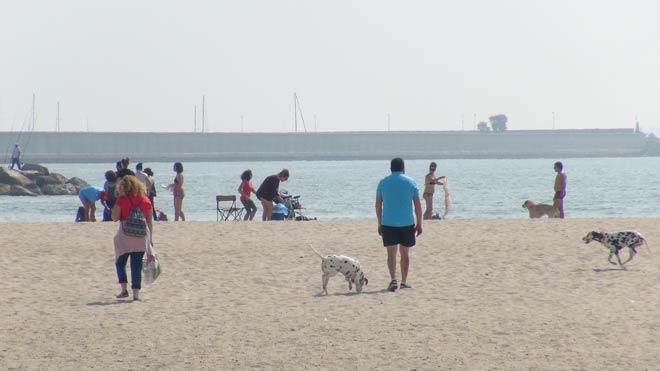 Los dueños de perros piden que la playa de Pinedo esté abierta para mascotas todo el año