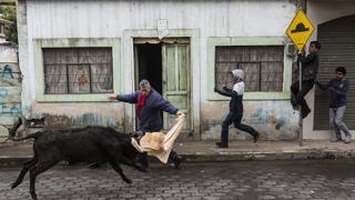 Fotos de la 'Pamplonada' de Píllaro en Ecuador