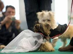 Por Un Día Lucen Diseños En Los Perros Para Se Y Convierten Modelos D9IWY2EH